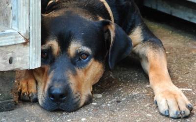 DJs 4 Charity 2013: První sponzorský dar putuje opuštěným zvířatům